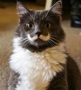 First grumpy cat now Mustache Cat! @Makenzi Wooten ...