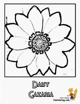 Flower Daisy Coloring Pages Flowers Daisies Colour Yescoloring Ten sketch template