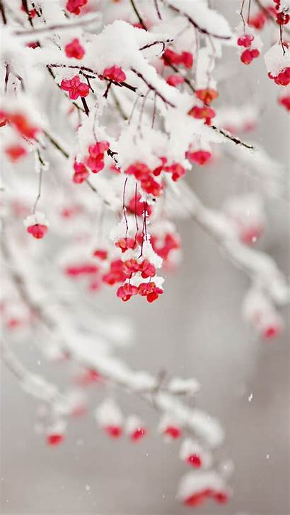 Winter Iphone Christmas Background Wallpapers Flowers Backgrounds