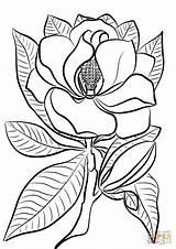 Magnolia Coloring Printable Disegni Colorare Drawings Tegninger Bambini Til Flower Fiori Flowers Kolorowanka Ispirazione Dalie Farvelaegning Paper Supercoloring Southern Drukuj sketch template
