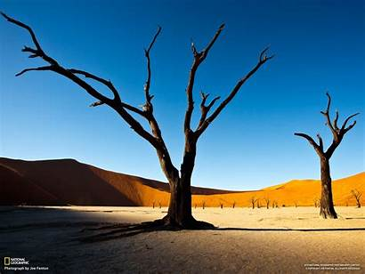 Geographic National Wallpapers Amazing Birds Trees Camelthorn