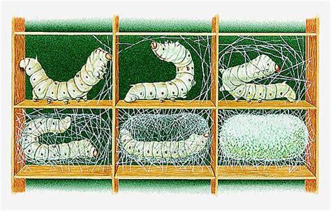 cr饌tion cuisine encyclopédie larousse en ligne sécrétion du cocon par des vers à soie