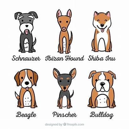 Beagle Dogs Breeds Different Vector Six