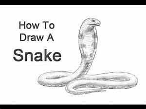 [Full-Download] How To Draw A Realistic Rattlesnake Head