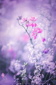 Pink and Purple Nature