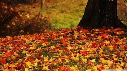 Leaves Autumn Yellow Background Desktop Wallpapers 4k