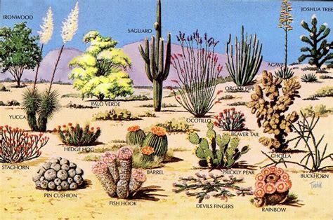 3 desert plants sonoran desert ecosystem