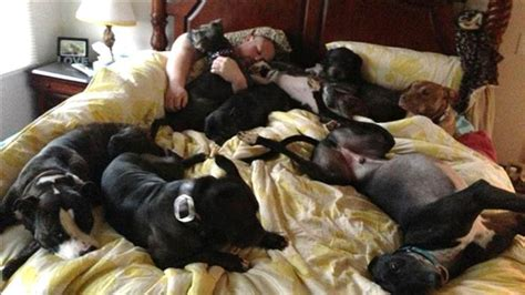 Couple Builds Huge Bed So All Their Dogs Can Sleep With Them