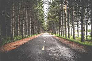 Free, Images, Tree, Nature, Forest, Road, Trail, Street, Sunlight, Asphalt, Pavement, Rural
