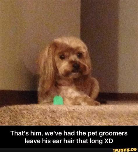 25 best memes about funny dog groomer funny dog groomer memes