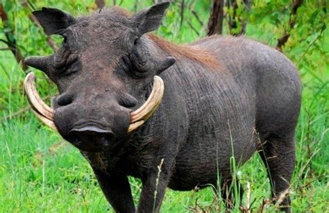 south african animals   fascinating  intriguing