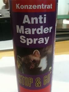 Anti Wespen Spray : hagopur premium lockmittel marder ~ Whattoseeinmadrid.com Haus und Dekorationen