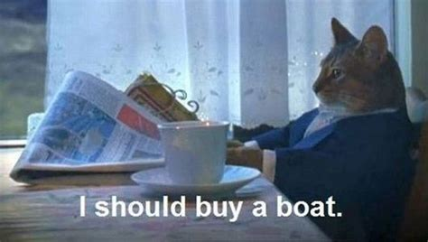 I Should Buy A Boat Gif Imgur by 10 Of The Web S Most Popular Cat Memes Mnn