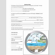 Worksheets Nutrient Cycles Worksheet Cheatslist Free Worksheets For Kids & Printable