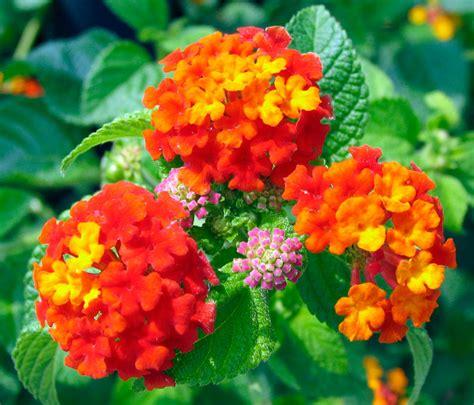 Poppular Photography Flower Cluster