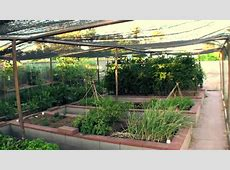 Vegetable Garden in Phoenix YouTube