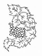 Coloring Pages Grape Grapes Fruits Printable Recommended sketch template