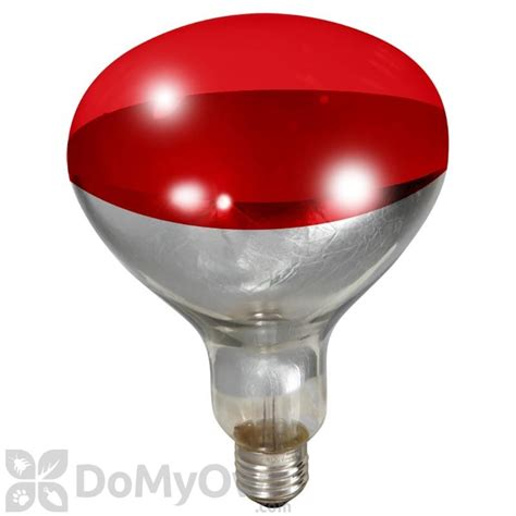 250 watt heat l little giant red heat l bulb 250 watt