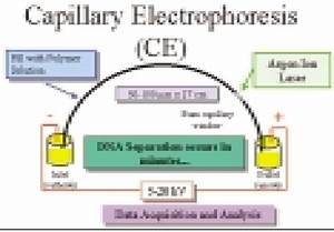 Sketch Diagram Of Electrophoresis Where The Extracted Dna