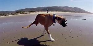 Two-Legged Boxer Dog Reminds Us To Carpe Diem In New GoPro ...