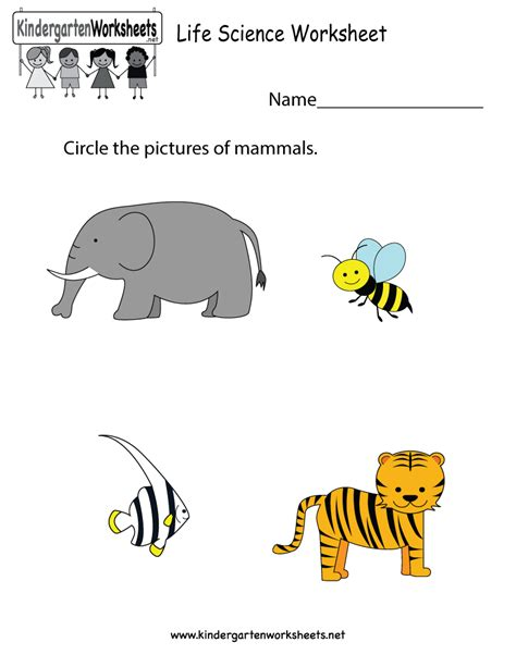life science worksheet free kindergarten learning worksheet for kids