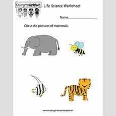 Life Science Worksheet  Free Kindergarten Learning