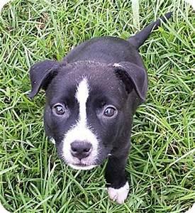 Williston, FL - Border Collie/Boxer Mix. Meet Shirley ...
