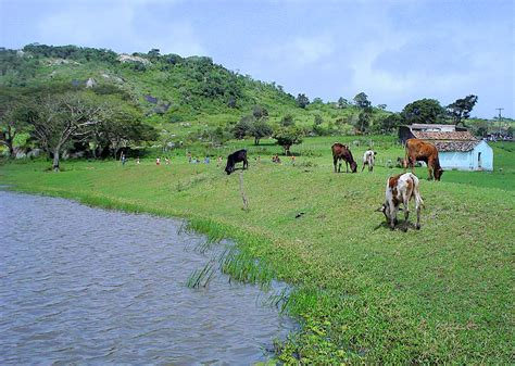 Mundo Rural E Ambientalismo Ecológico  Só Mais Um Site