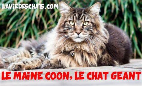 Laviedeschats.com Vous Conseille Sur La Cohabitation Entre