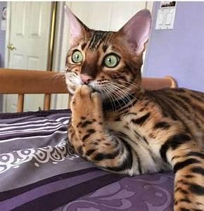 ooops kittyworks