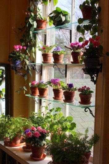 Window Garden Plants by Indoor Window Garden On Indoor Gardening