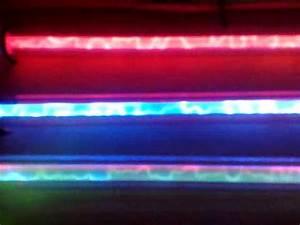 Sunbeam Liquid Neon