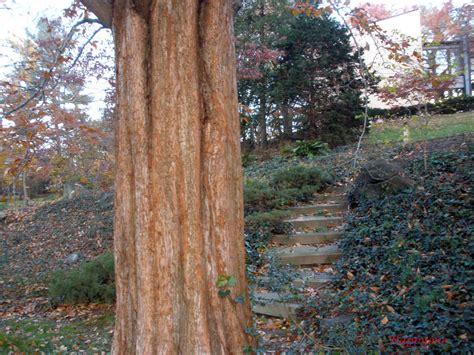 snapshots by happyone tree trunk