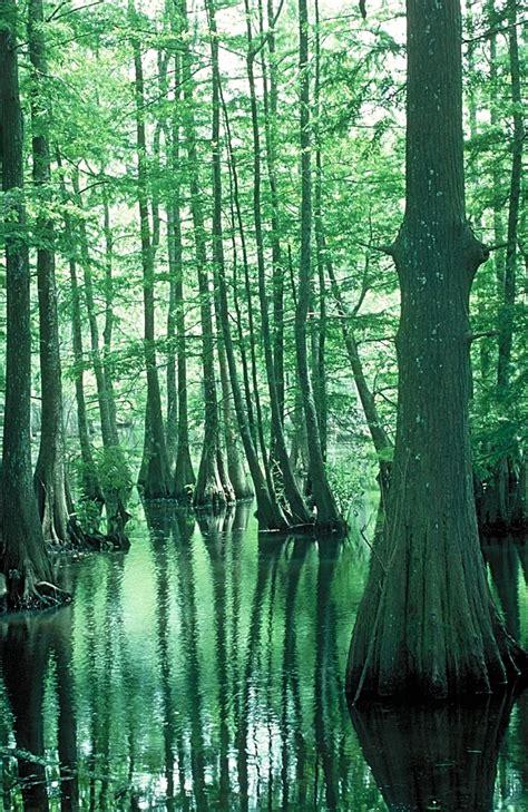 atchafalaya basin swamp  louisiana location facts