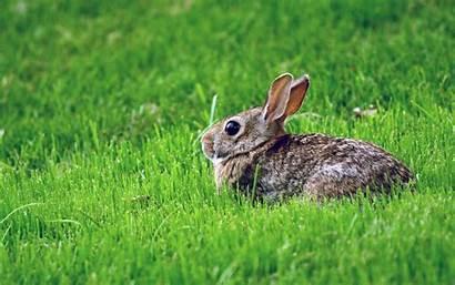 Bunnies Rabbit Grass Field Brown Hare Terrestrial