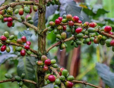 It doesn't have to be a cup of excellence winner, just whatever blend suits your palate best. 17 Reasons Why We Love Costa Rica
