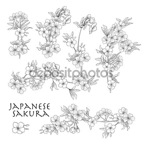Branch of cherry blossoms japanese cherry Stock line