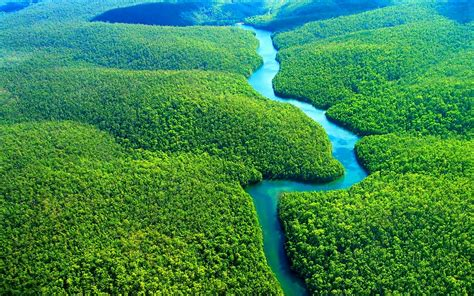 amazon rainforest wallpaper  desktop  mobile  high