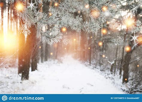 Christmas Background Winter Forest With Glowing