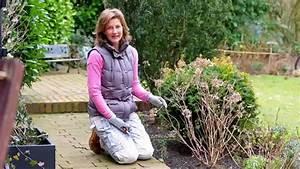 Hortensien Wann Schneiden : qvc gartentipp m rz hortensien schneiden youtube ~ Lizthompson.info Haus und Dekorationen