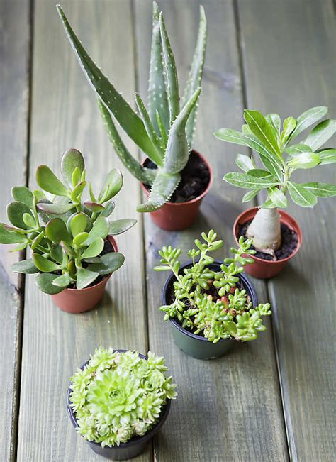 3 smart small space gardening ideas and tips for the city