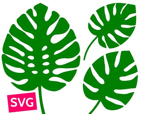 Cuttable And Printable Monstera Leaf Svg File. Pdf Clipart