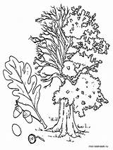 Tree Oak Coloring Pages Trees Printable Recommended Getcolorings Mycoloring sketch template