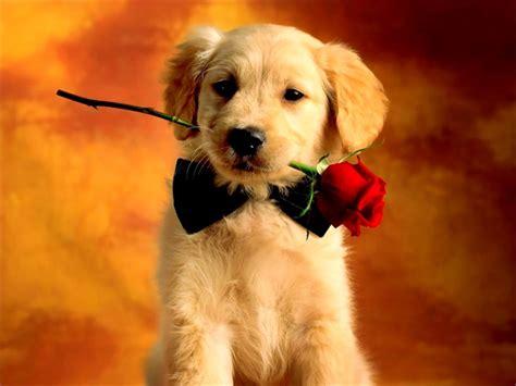 dog neutered housemydog blog