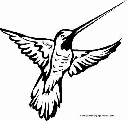 Coloring Bird Pages Hummingbird Printable Birds Cartoon