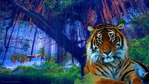 In The Jungle Wallpaper and Background Image | 1366x768 ...