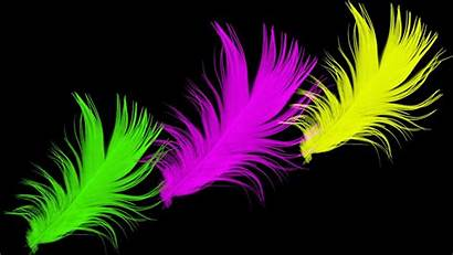 Bright Neon Desktop Wallpapers Colorful 3d Feather