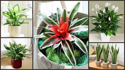 12 istabas augi, kas spēj izdzīvot pat vistumšākajā stūrī ...