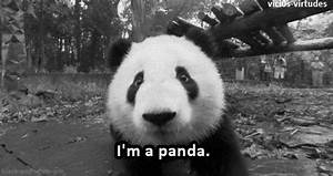 Black And White Panda GIF - Find & Share on GIPHY