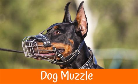 dog muzzle  review    bones